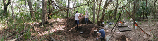 Excavation of Relict Shell Mound